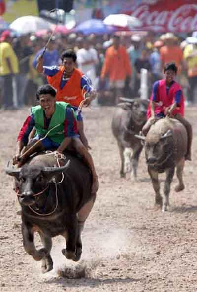 Buffalo yarışlarından ilginç görüntüler