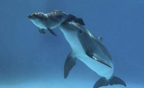 Yunus balığının doğum anı
