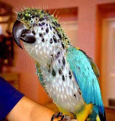 Hayvanlara photoshop değerse