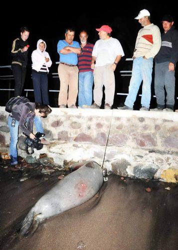 Öldürülen fok Badem mi?