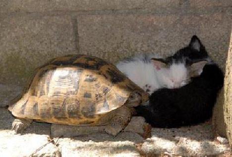 Sevimli hayvanların dostluğu