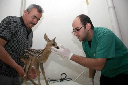 Küçük Bambiin büyük dramı