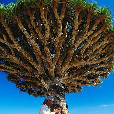 Doğadaki tuhaf bitkiler