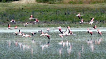 Filomingolar Düden gölüne geri döndü