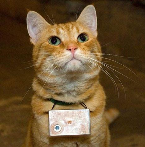 Fotoğrafçı kediden kareler