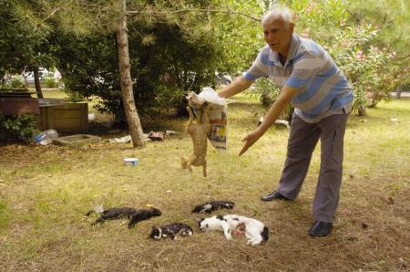Ataköyde kedi vahşeti !