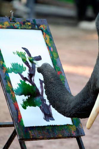 Fil resim yapabilir mi ?