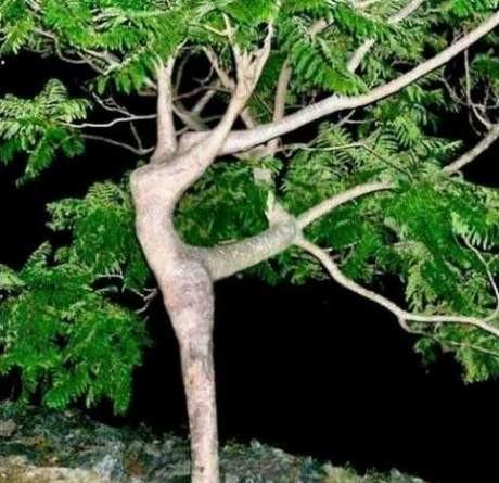 Dünyanın en ilginç ağaçları !