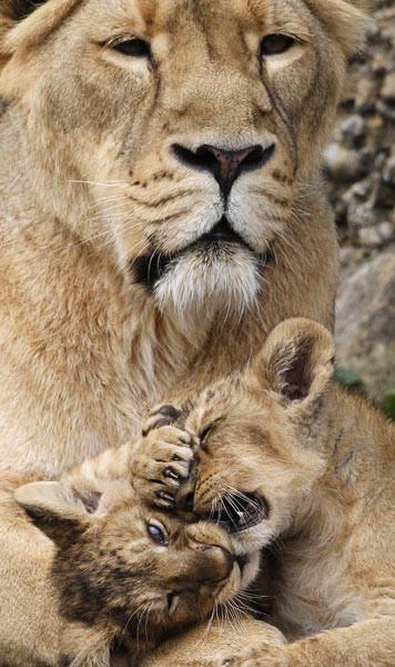 Bebekleriyle poz verdi!