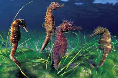 Okyanusun gizemli yaratıkları