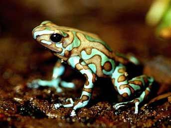 İşte dünyanın en zehirli canlıları