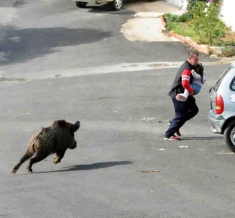 Bodrumda domuz paniği!