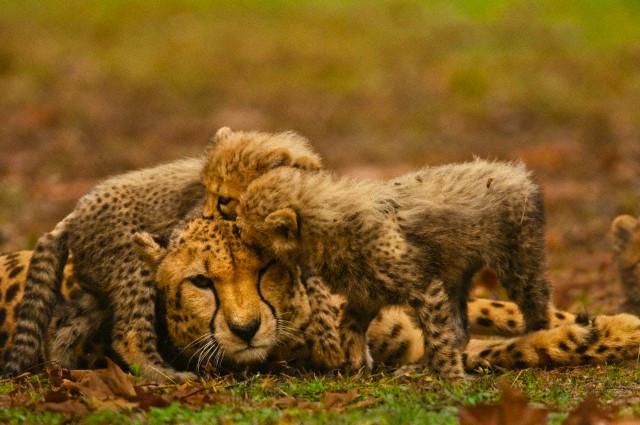Hayvanların inanılmaz güçleri