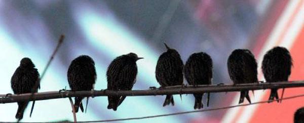 Kuşların muhteşem şovu!