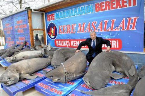 41 köpekbalığını mumyaladılar