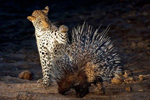 Vahşi doğanın avcı hayvanları