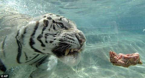 En sevdiği oyun suda 'avlanmak'