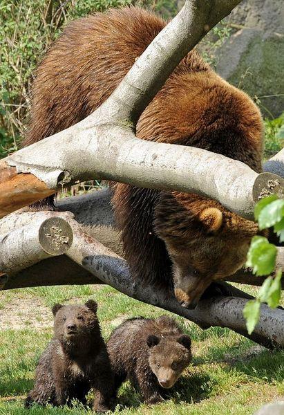 Hagenbeck Hayvanat Bahçesi'nin sakinleri