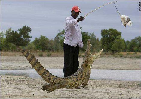 Timsahın avlanma fotoğrafları