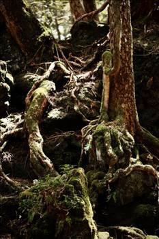 İntihar ormanı: Aokigahara