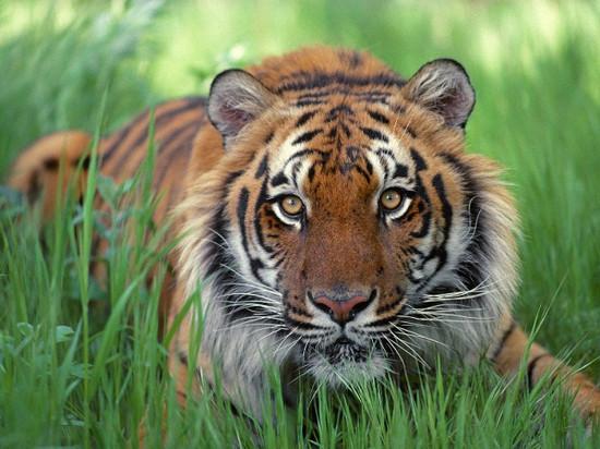 En çok yaşayan hayvan hangisidir ?