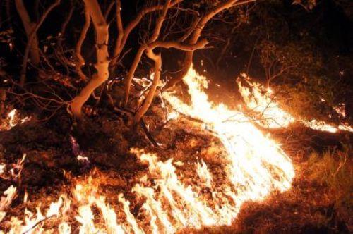 Datçada orman yangını