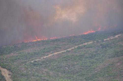 İzmir Seferihisar orman yangını korkuttu