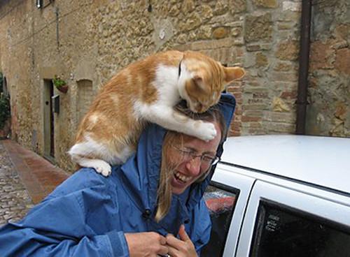 Hayvanların intikamı böyle oldu !