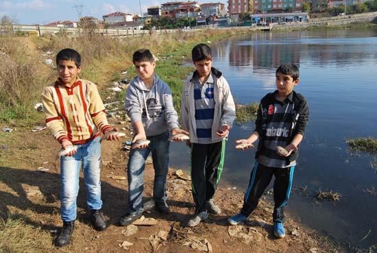 Sultanbeyli göletinde binlerce balık kıyıya vurdu