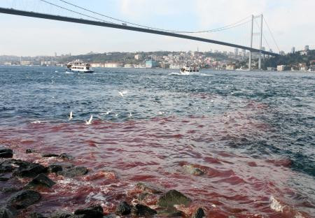Deniz kırmızıya boyandı