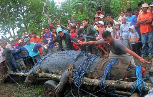 Filipinlerde dev timsah yakalandı