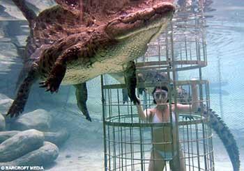 Su altında timsahla başbaşa