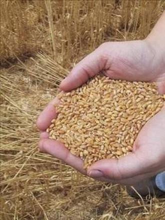 Tam tahıllı besinler ne kadar önemli ?