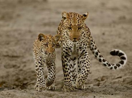 Anneden yavrusuna av eğitimi