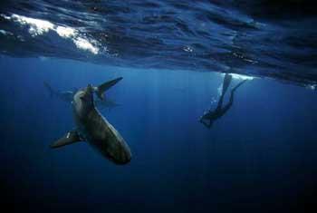 Onun en iyi arkadaşı, köpekbalıkları!