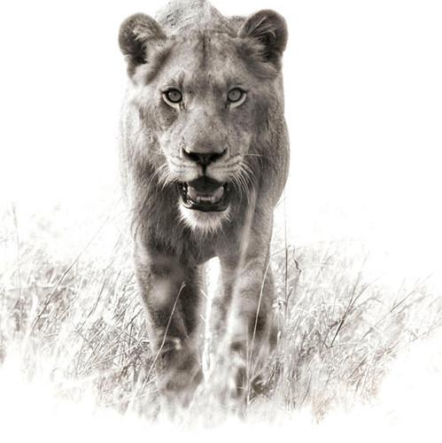 Vahşi doğaya siyah-beyaz bakış