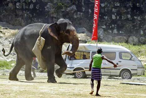 Filler öfkeden çıldırınca