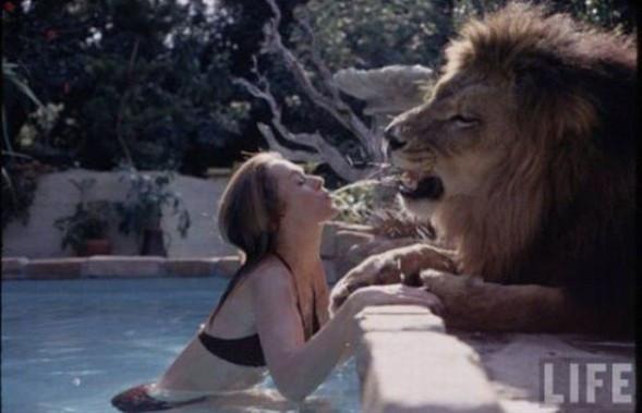 Evinde aslanla yaşıyor !