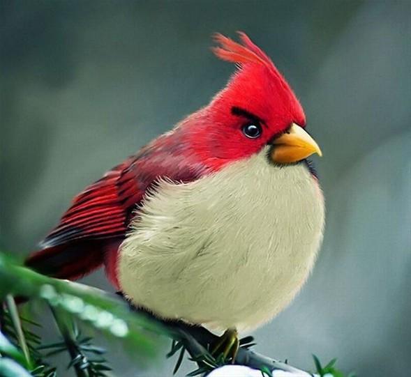 İşte gerçek Angry Birds !