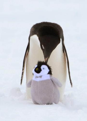 Şaşkın penguen