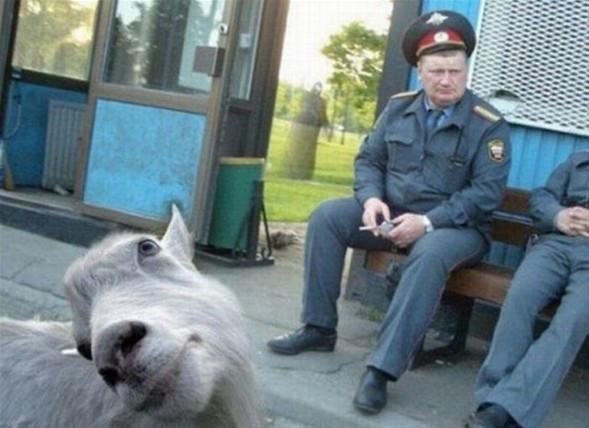Fotoğrafçıları şaşırtan hayvanlar
