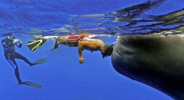 50 tonluk balinayla kafa kafaya