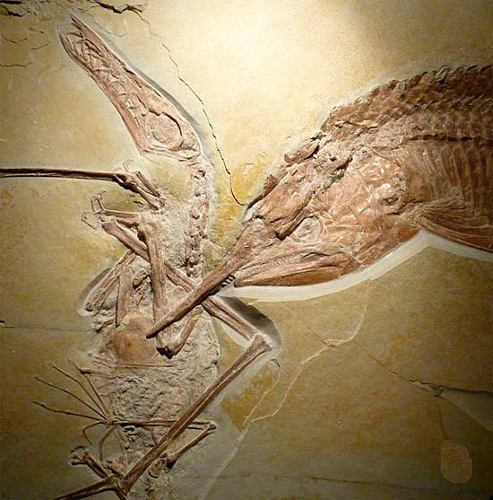 120 milyon yıllık kavga!