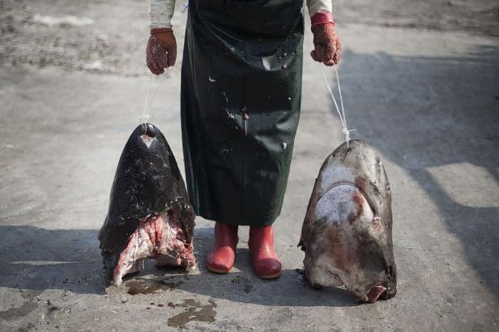 Köpekbalıklarına yüzgeç vahşeti
