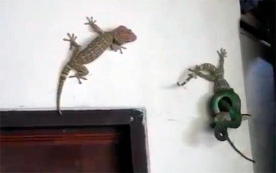 Arkadaşını yılandan kurtardı!