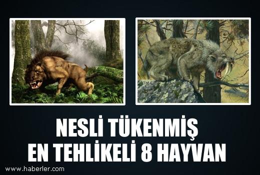 Nesli tükenmiş en tehlikeli 8 hayvan