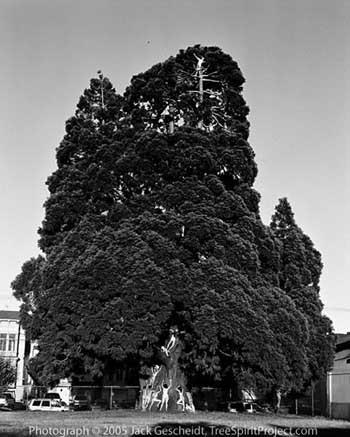 Sanat için soyunup ağaca çıktılar