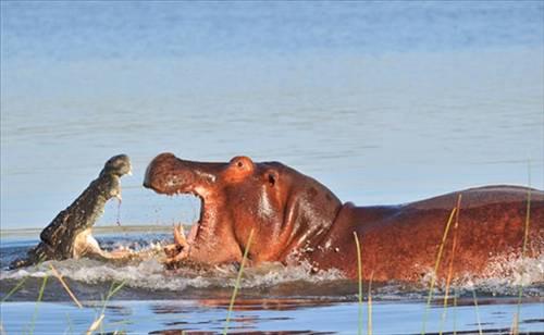 Av ve avcı karşı karşıya