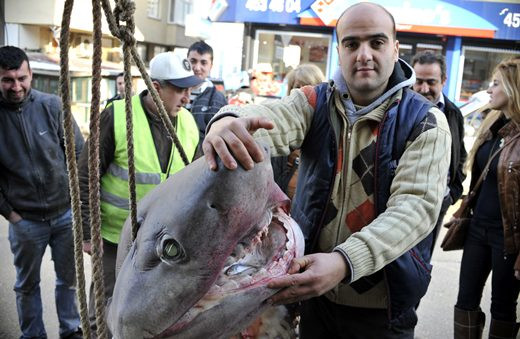 Marmarada köpekbalığı