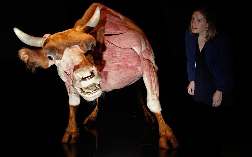 Anatomik safari
